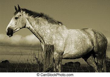 Irish Horse, Newcastle.