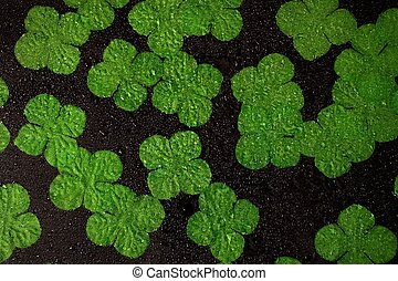 Irish shamrocks with water droplet