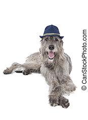 Irish wolfhound dog in a hat on a white background
