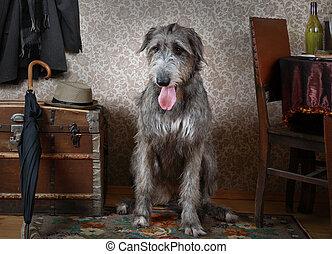 Irish wolfhound dog indoors