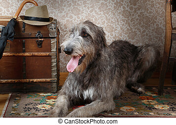 Irish wolfhound indoors