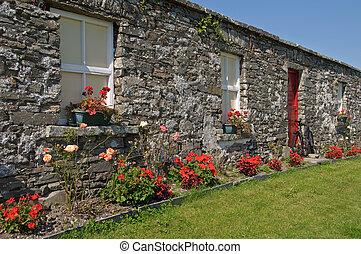 irlandés, bicicleta, escénico, rosas, cabaña, rural