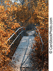 Old foot bridge in autumn forest