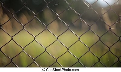Iron fence in summer field  focus in out. Green grass on background. Focus in out