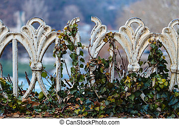 Iron fence, overgrown with ivy