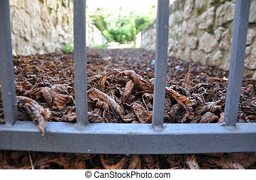 iron gate and leaves