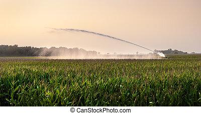 irrigação, campo milho
