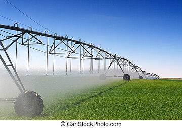 irrigação, colheita
