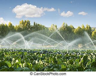 irrigação, sistemas, em, um, jardim vegetal