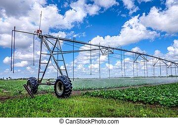 irrigação, terra cultivada