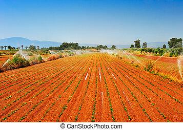 irrigado, fazenda