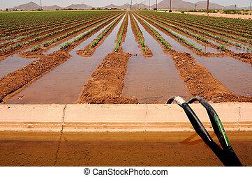 Irrigated Cotton Field