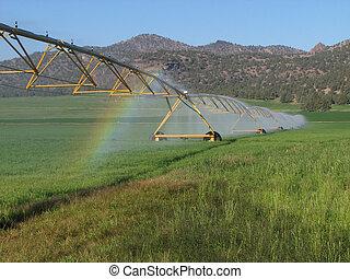 irrigated hay field