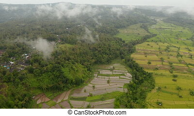 Irrigated rice fields near tropical rainforest in Bali. Aerial view of farm fields near small village in a jungle in Indonesia 4K
