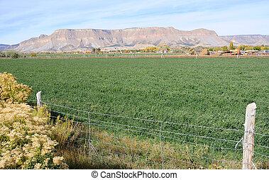 Irrigated Utah Desert Farm