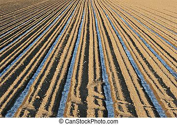 irrigatie