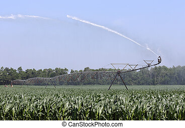 Irrigating a Corn Crop