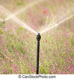 industrial irrigation system watering a flower field