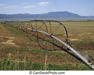 Irrigating a Hay Field