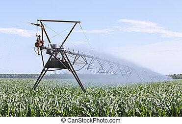 Irrigating Corn