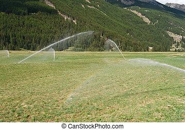 irrigating field on summer