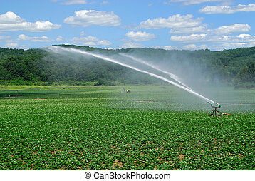 Irrigating Field - Potato field in summer being watered by...