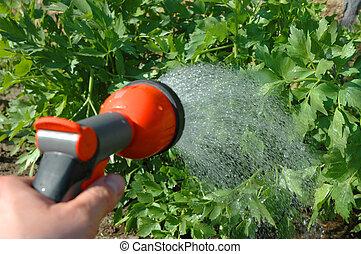 Irrigating - irrigating  plants with irrigation equipment