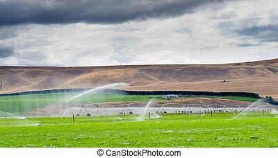 Irrigating lush farm pastures in central Otago NZ