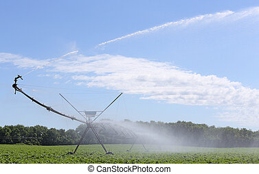 Irrigating Soybean Plants