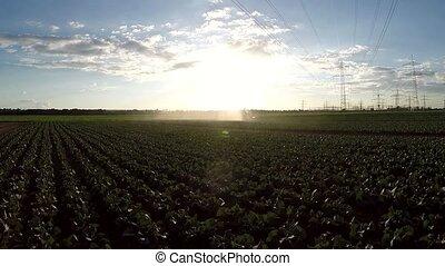 irrigation, aérien, plante