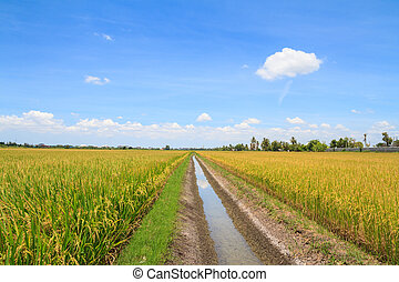 Irrigation canal in rice field