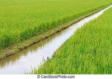 Irrigation canal in the paddy ,Thailand