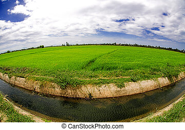 Irrigation canal system in rice field