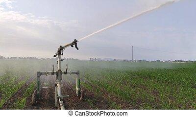 irrigation, champ, maïs, 2