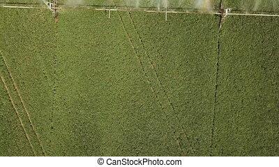 irrigation, champ, spécialisé, automatique, équipement