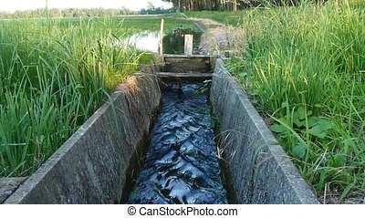 irrigation ditch - water flows in a ricefield canal