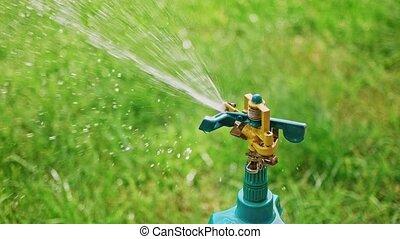 Irrigation. Gardening in backyard - sprinkler on tripod ...