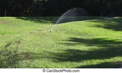 Irrigation in a garden