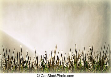 irrigation in the fields