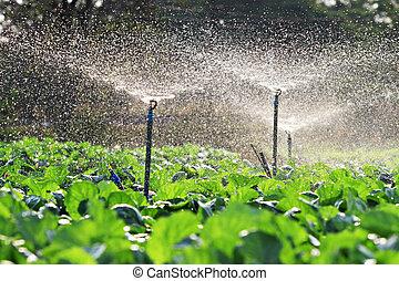 irrigation, légumes, s