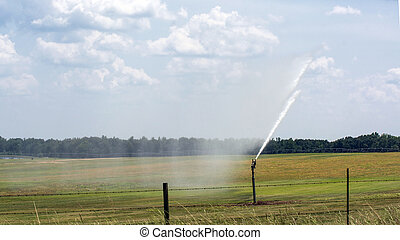 Irrigation of a hay field