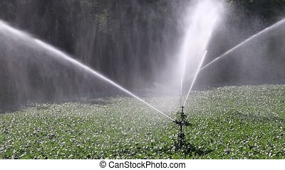 irrigation of cultivated fields