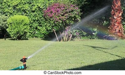 irrigation of the grass