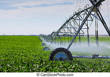 Irrigation Pivot - An irrigation pivot watering a field of...