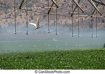 Irrigation pivot .