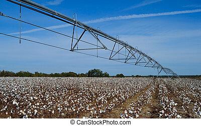 Irrigation pivot in cotton field