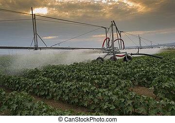 irrigation, pivoter, système