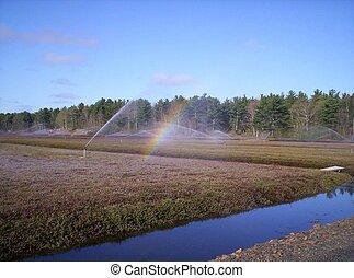 Irrigation & rainbow