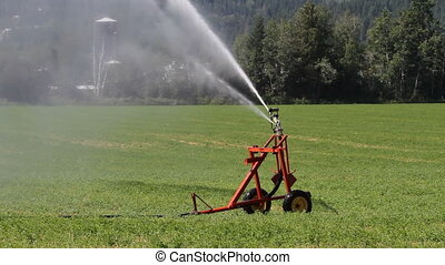Irrigation Sprinkler - Irrigation sprinkler watering hay...