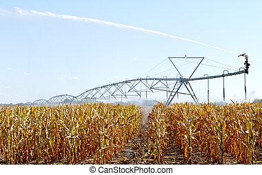 irrigation sprinkler - sprinkler is spraying in the corn...